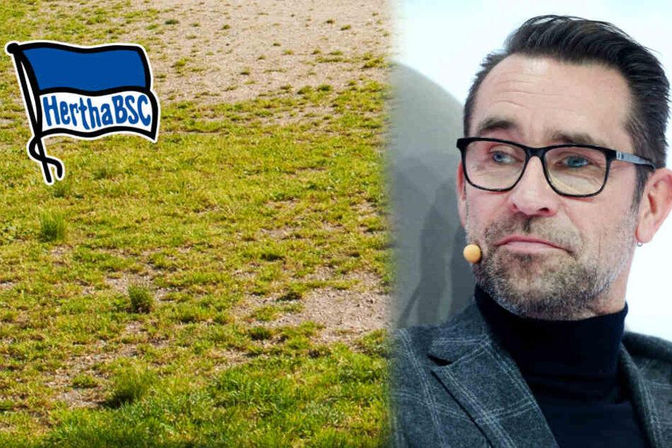 """""""Dieser Rasen ist etwas für Pferde"""": Hertha prüft rechtliche Schritte gegen Stadionbetreiber"""