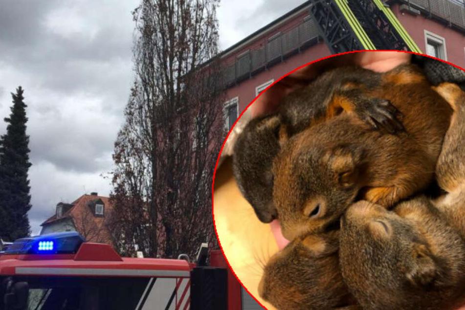 Feuerwehr rettet verwaiste Eichhörnchen-Babys vor dem sicheren Tod