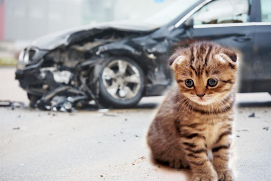 Tragisch: Rettung einer Katze endet mit ihrem Tod und hohem Sachschaden