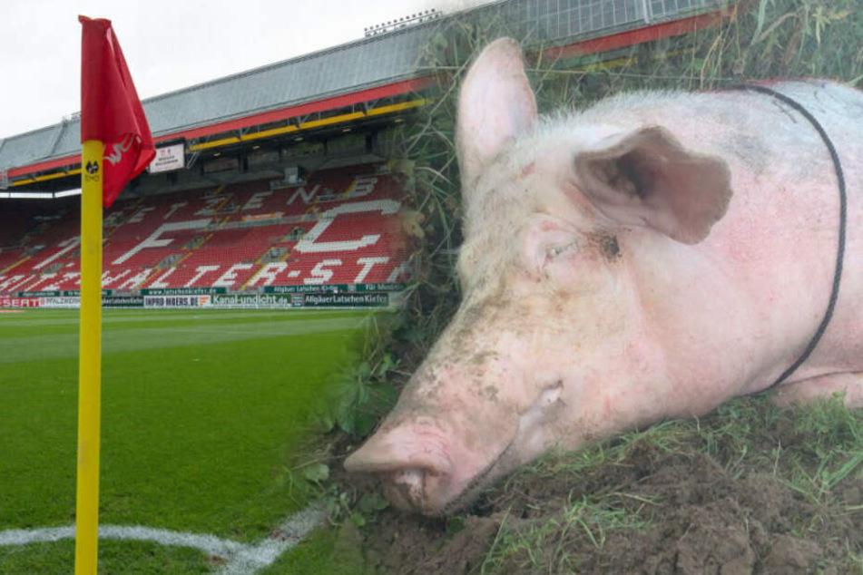 Kaiserslautern gegen Waldhof Mannheim: Fußball-Chaoten quälen Schwein!