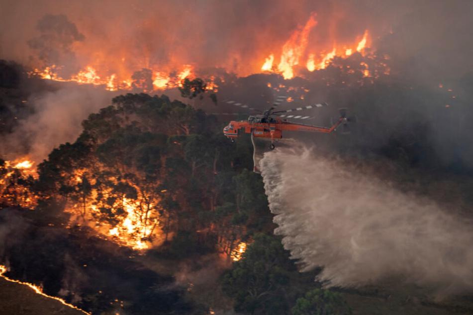 Ein Löschhubschrauber bekämpft ein Buschfeuer im Bundesstaat Victoria. Die Buschbrände im Südosten Australiens geraten immer mehr außer Kontrolle und haben weitere Todesopfer gefordert.