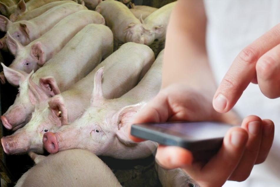 Der Bauer bekam gleich einen Notfall-Alarm auf sein Handy. (Symbolbild)
