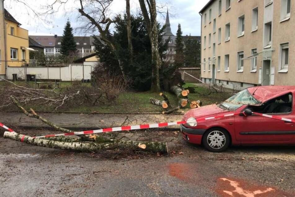 In Erkrath stürzte ein Baum auf einen Kleinwagen.