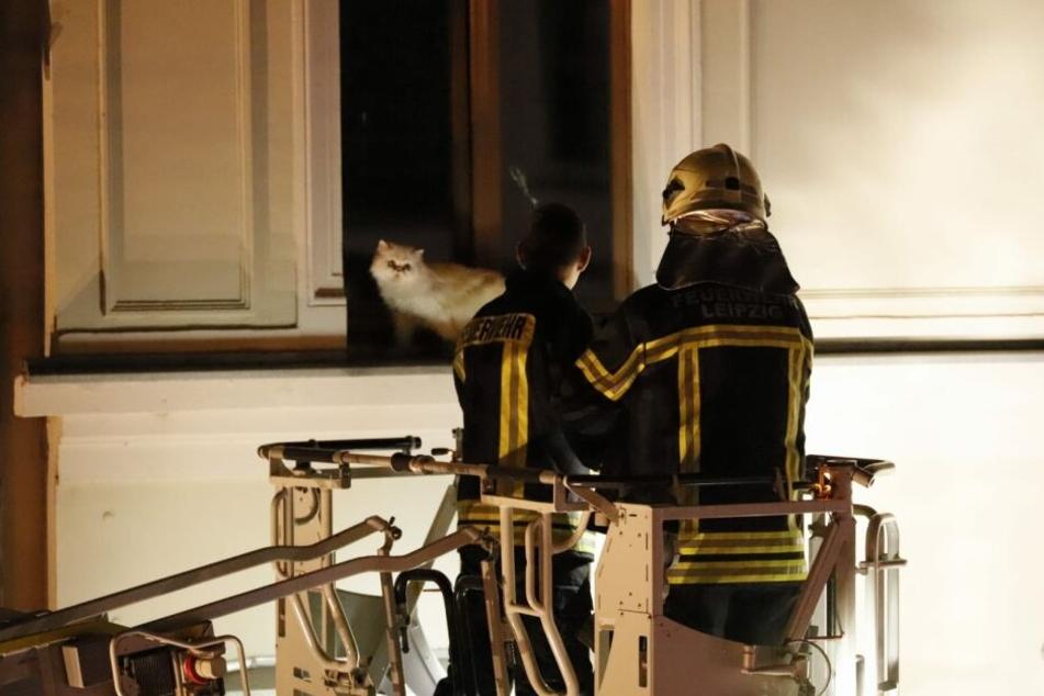 Die Rettung folgte erst am späten Abend gegen 23 Uhr: Per Drehleiter wurde das Tier aus seiner misslichen Situation befreit.