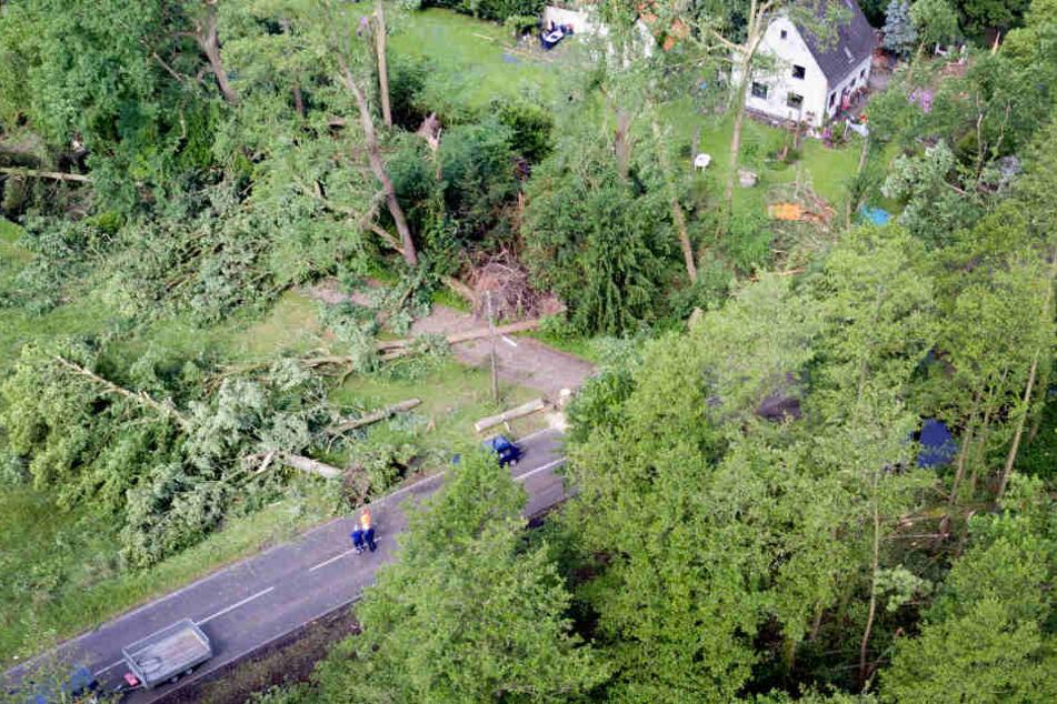 Viele Bäume knickten einfach um.