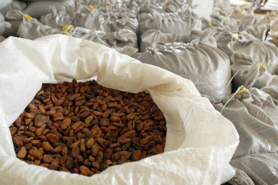 Schädliche Rückstände können durch die Verpackung auf den Kakao übergehen
