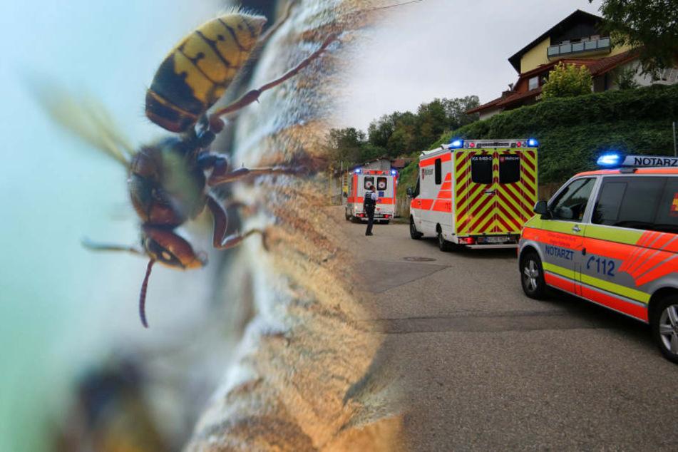 Hornissen-Angriff auf Festbesucher: Wurden die Tiere gereizt?