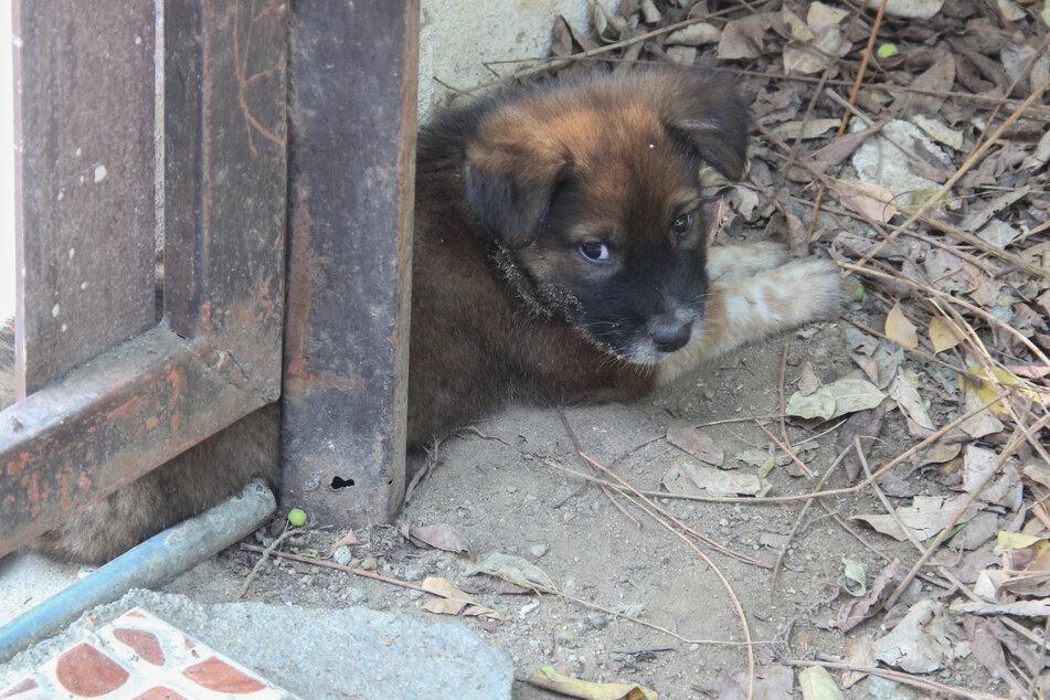 Ein kleiner Straßenhund ruht sich aus. NRW schreibt einen neuen Tierschutzpreis aus, der mit insgesamt 30.000 Euro dotiert wird. (Symbolbild)