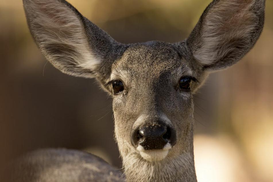 Jäger musste das Tier erschießen: Freilaufender Hund verletzt Reh schwer