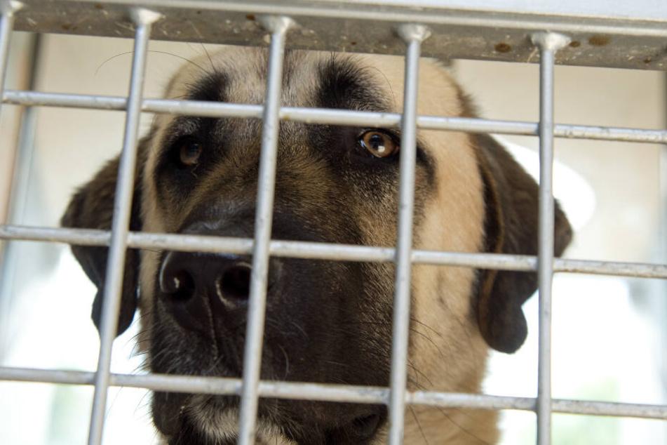 Hund beißt Seniorin in Kopf und tötet sie: Urteil gegen Halter erwartet!