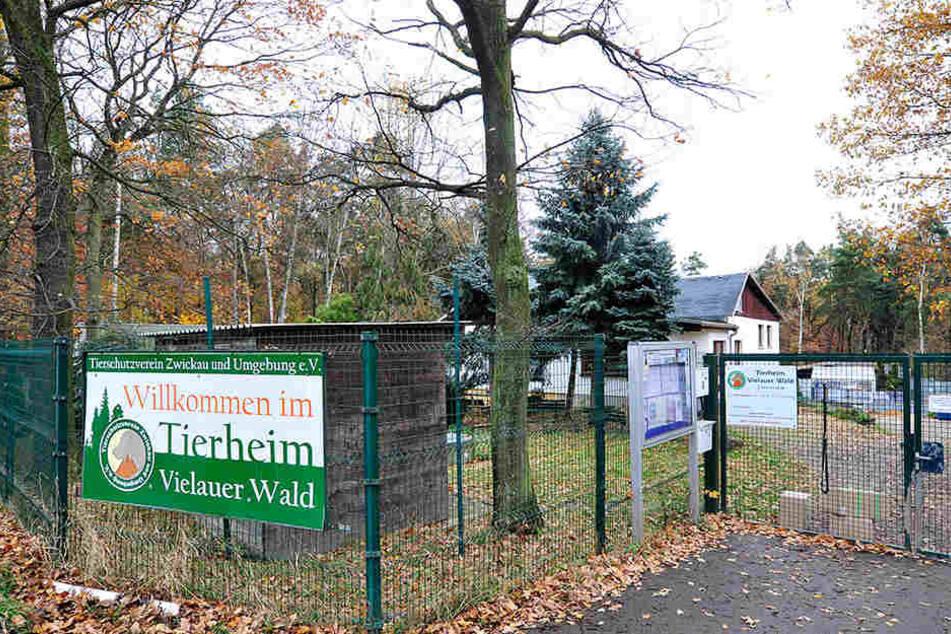 Das vom Tierschutzverein betriebene Zwickauer Tierheim in Vielau. Die Tierfreunde hatten unter anderem dortige Haltungsbedingungen kritisiert.