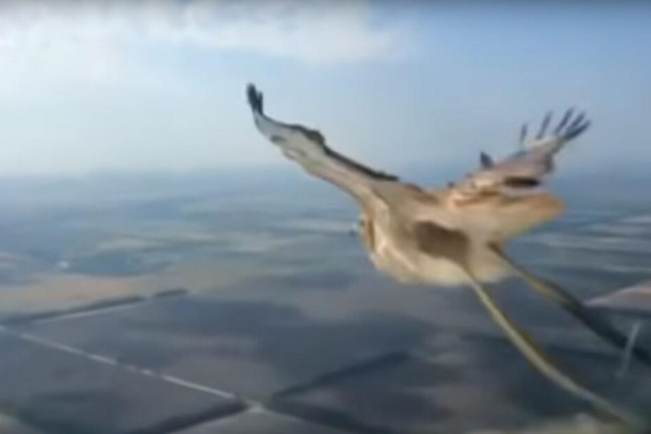 Übles Video: Hier kracht ein Vogel in ein Flugzeug