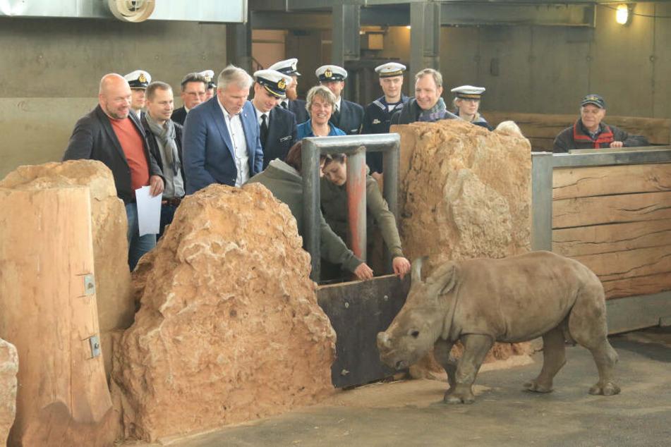 Taufe im Zoo! Nashorn-Baby Kiano hat ganz besondere Paten