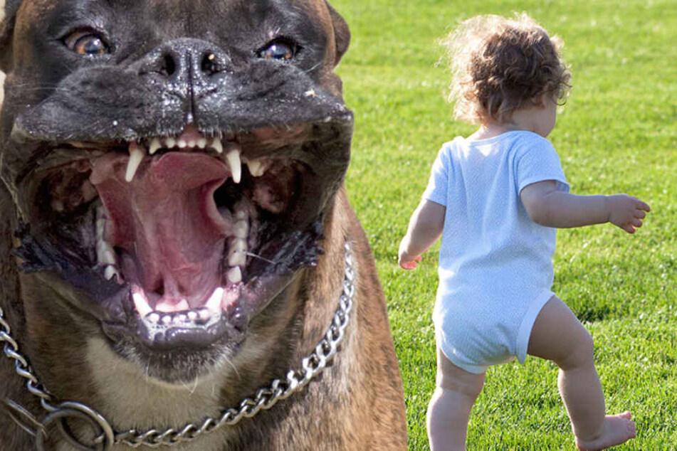 Brutale Attacke! Hund beißt Kleinkind ins Gesicht