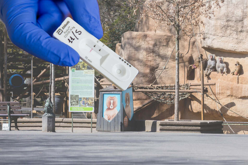Köln: Eintritt in Zoo und Museen nur noch mit negativem Schnelltest