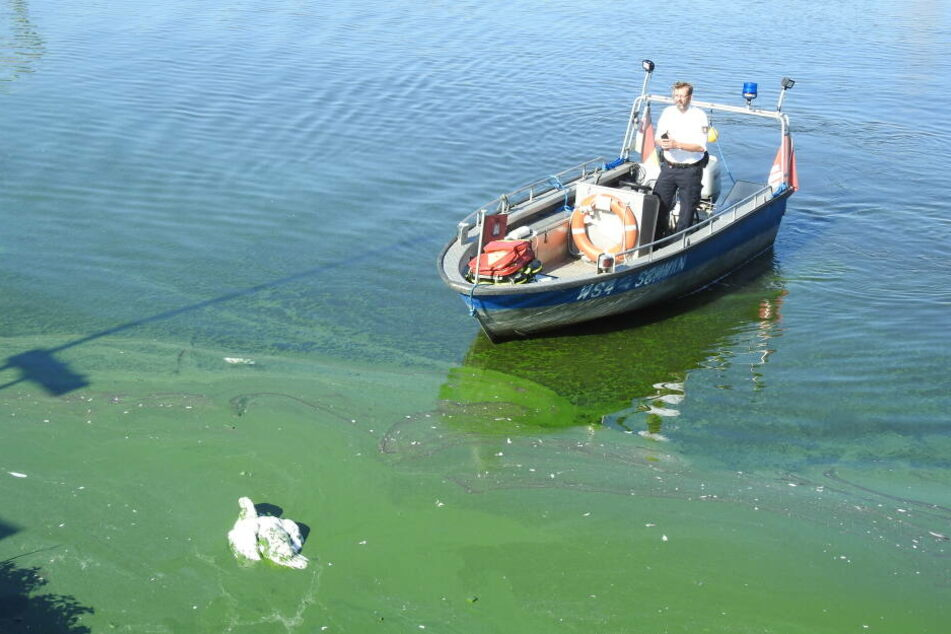 Schwanenvater Olaf Nieß rückt per Boot zur Rettung an.