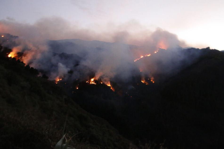 Mehrere Orte evakuiert: Waldbrände wüten auf Gran Canaria