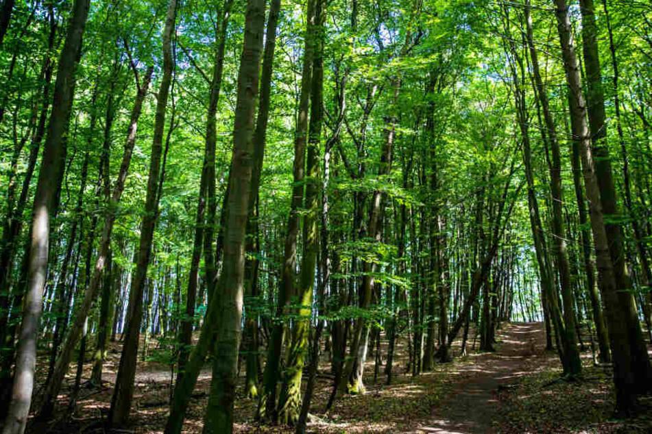Wälder dienen oft als Naherholungsgebiete, die Besitzer bekommen nichts dafür.
