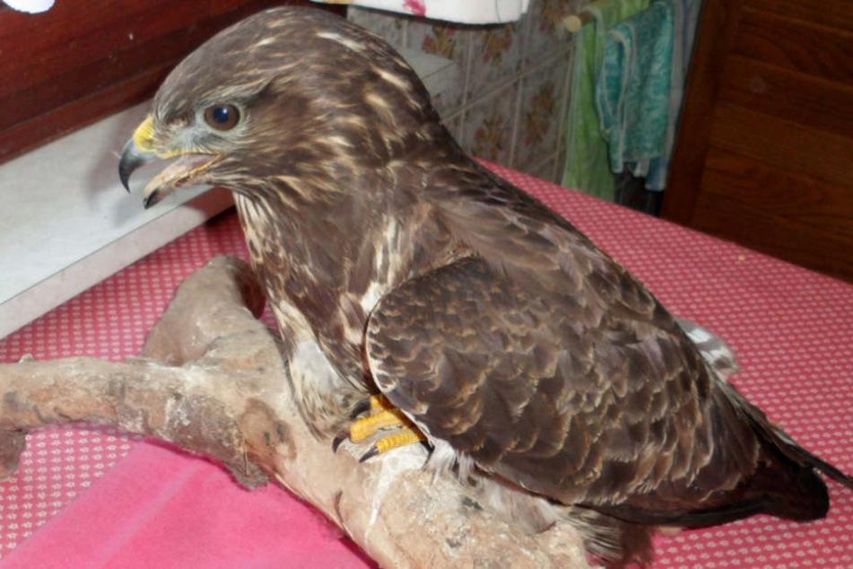 Der verletzte Vogel saß am Rande eines Feldwegs.