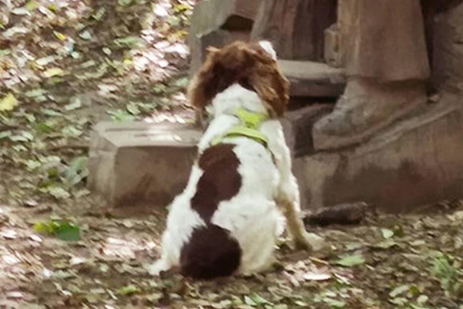 Der Hund sitzt vor dem Mann und wartet auf einen Wurf.
