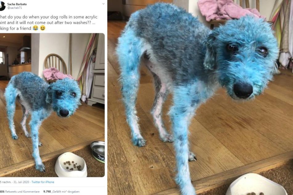 Bessies neuer Look: Blau ist das neue Schwarz...