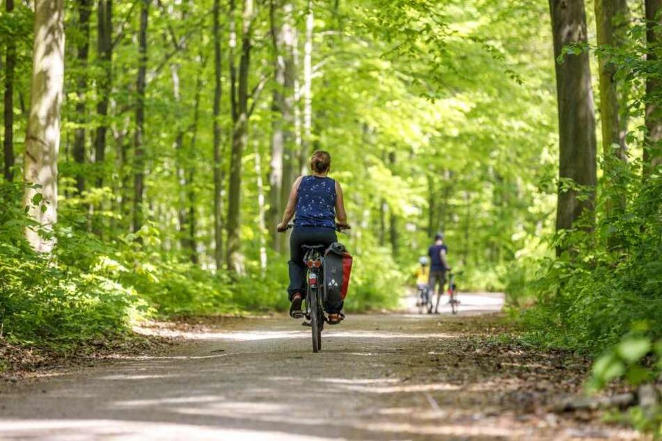 Die Dresdner Heide lockt Spaziergänger und Radfahrer an.