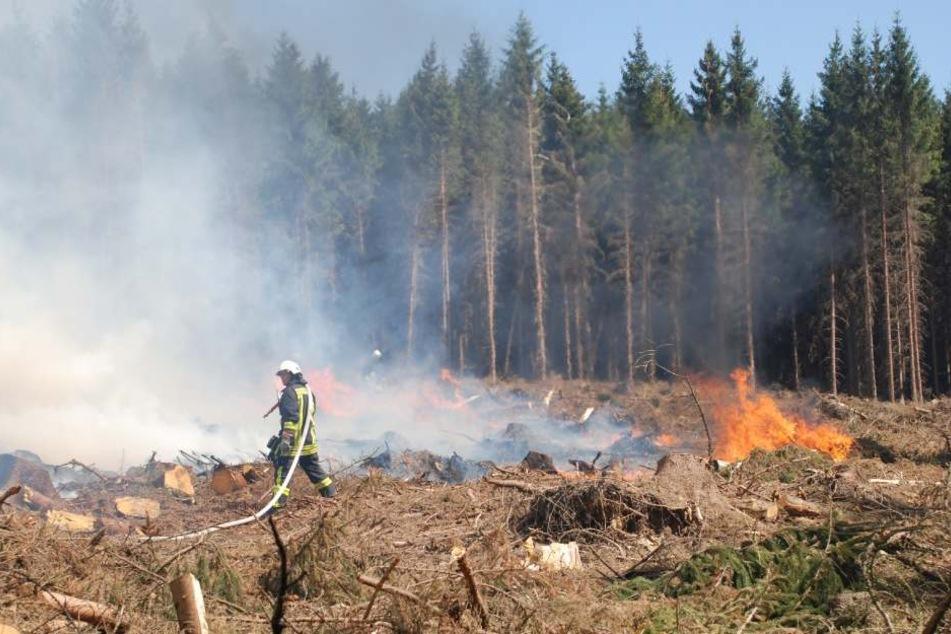 In den vergangenen Wochen gab es in NRW aufgrund der Trockenheit zahlreiche Waldbrände.