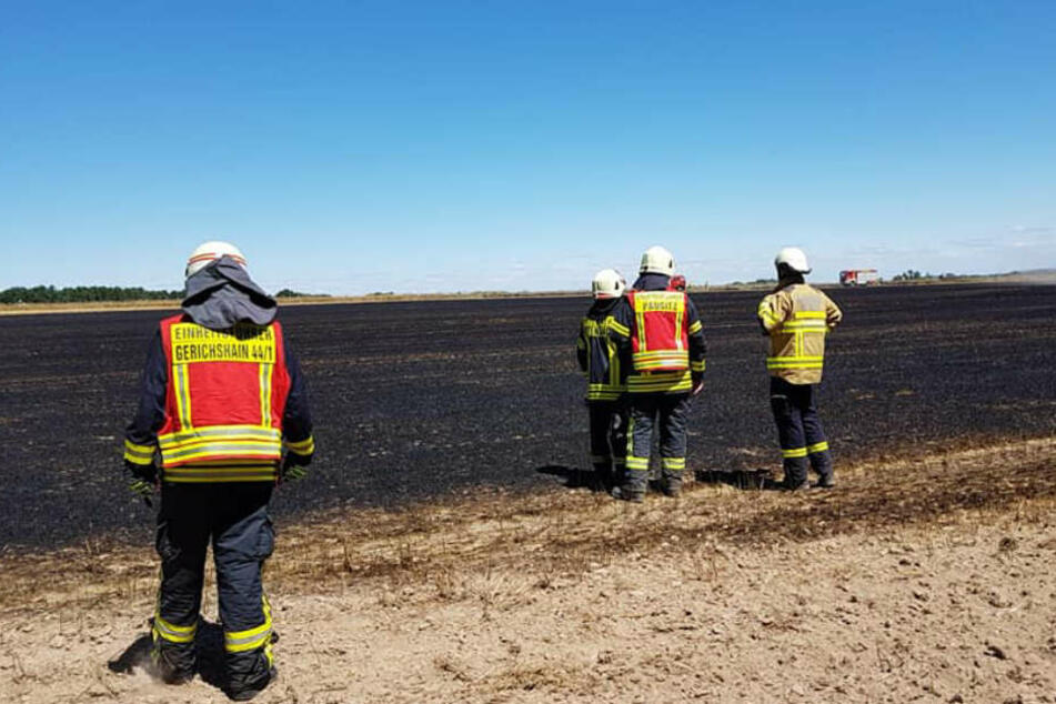 In Gerichshain zerstörten die Flammen große Teile eines Feldes.