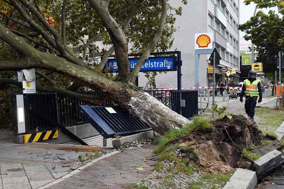 Allein in Berlin sind durch die Herbststürme 56.000 Bäume beschädigt oder umgestürzt.