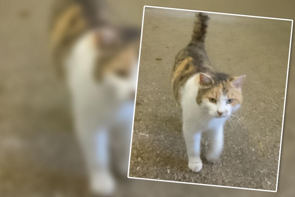 Beruf: Katze! Vierbeiner mit Spezial-Auftrag im bayerischen Polizeieinsatz