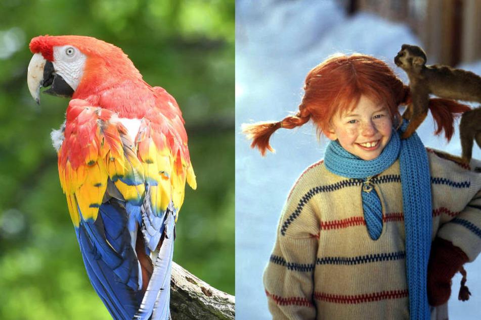 "Papagei ""Douglas"" (alias ""Rosalinda"") hatte 1970 im Film ""Pippi in Taka-Tuka-Land"" mitgespielt. (Fotomontage)"