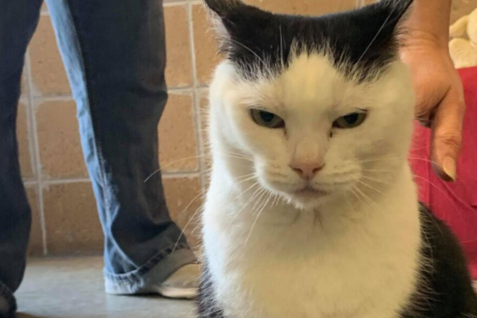 Pfleger glauben Katze sei krank, doch die Wahrheit ist viel dreister