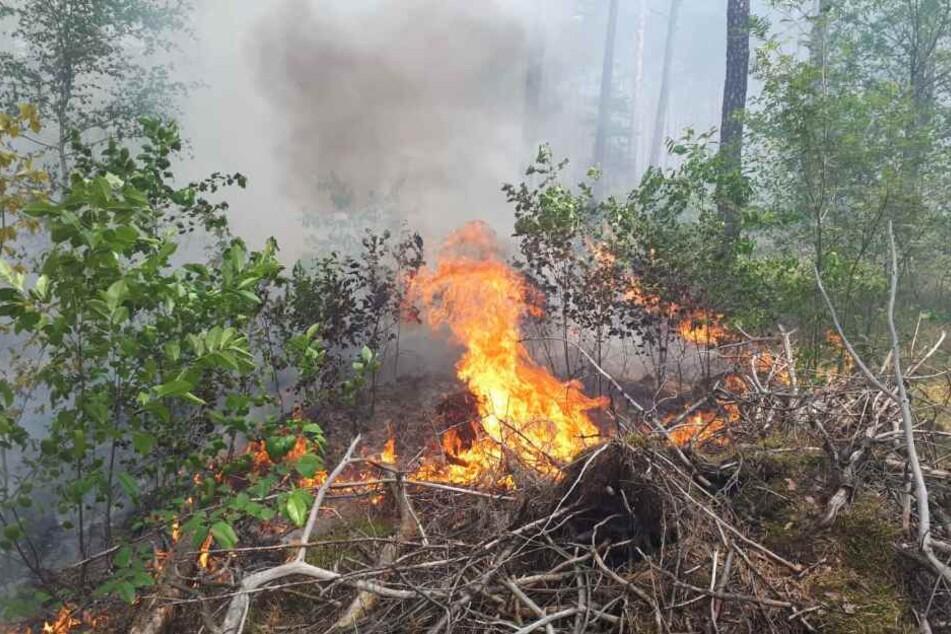 Flammen schlagen aus dem Waldboden.