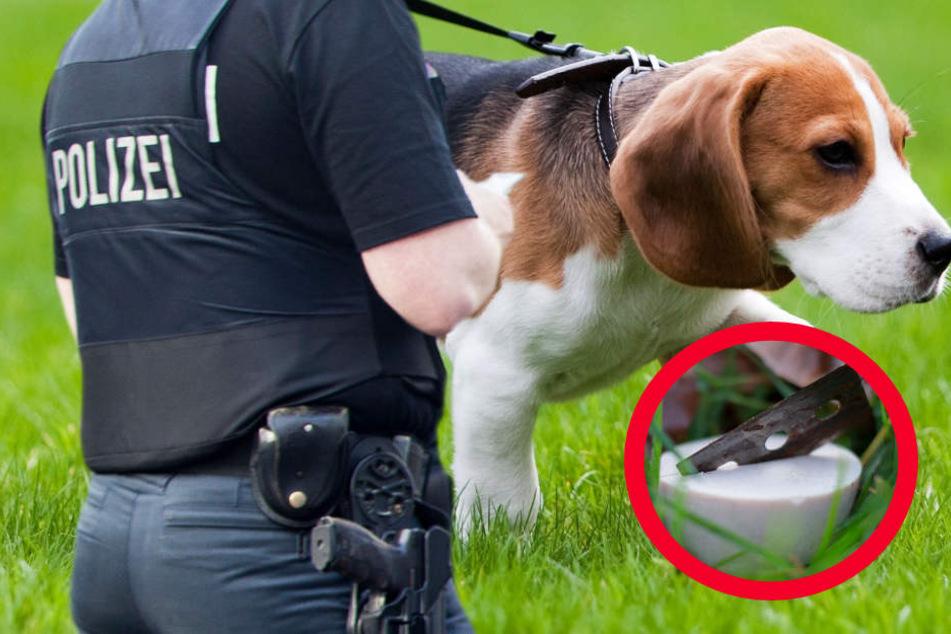 Die Polizei rät: Hundehalter sollten ihre Tiere nur noch angeleint ausführen (Symbolbild).