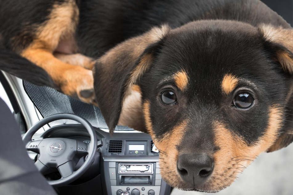 Hund bei großer Hitze in Auto eingesperrt: Frau reagiert genau richtig!