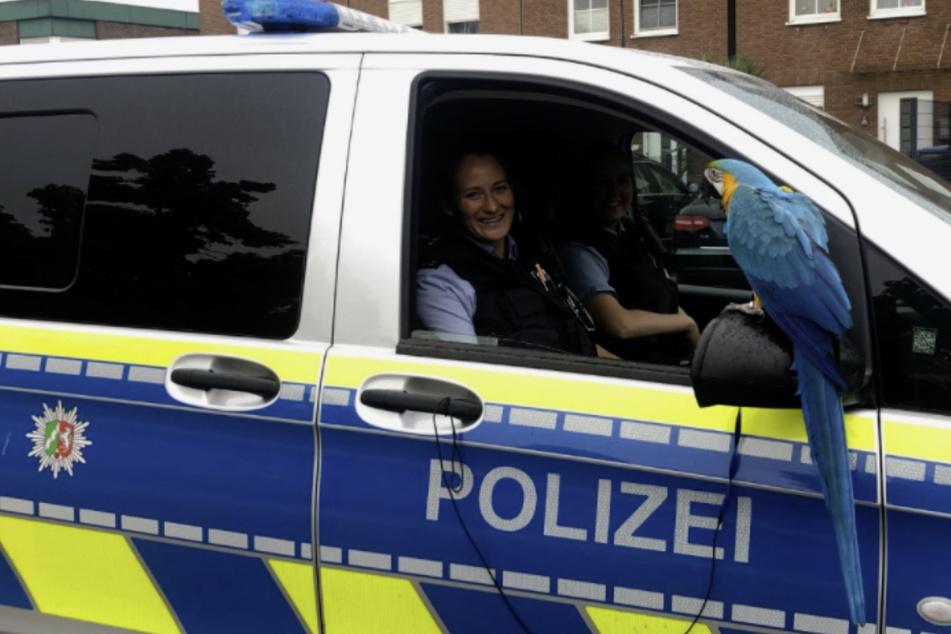 """Die Polizistinnen staunten nicht schlecht, als sie Gelbbrustara """"Calippo"""" trafen."""