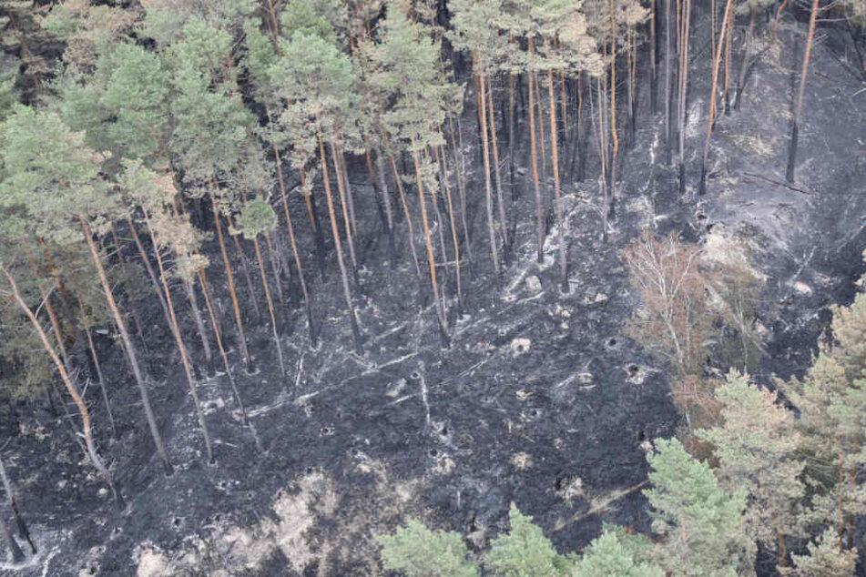 Ein Großteil des Waldes ist verbrannt.