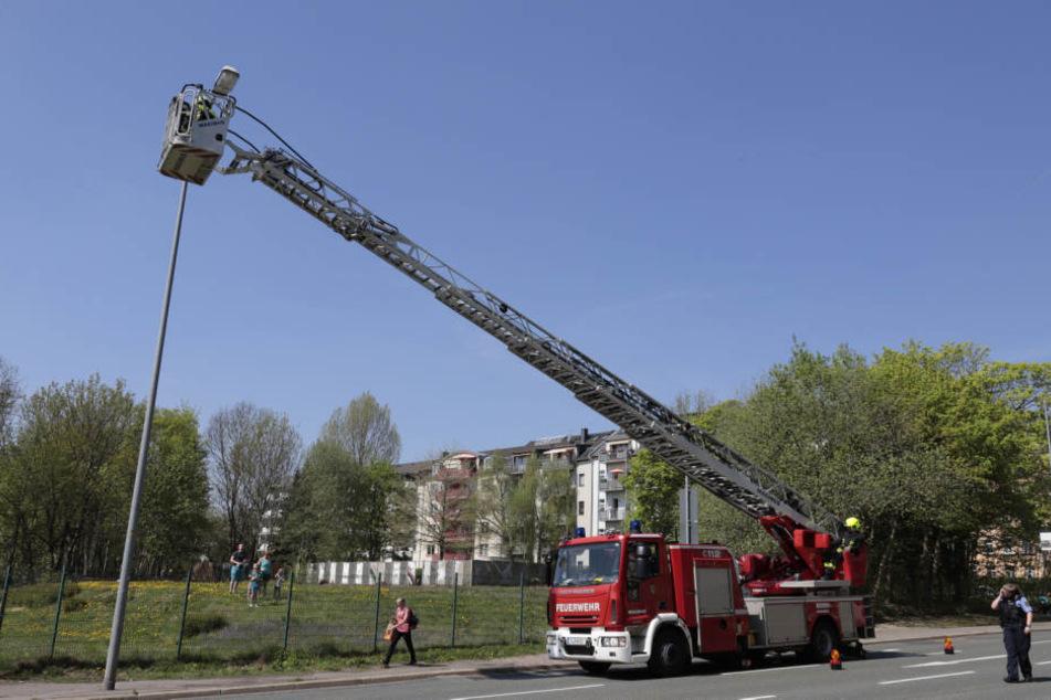 Die Feuerwehr rettete den Waschbär mithilfe einer Drehleiter von der Straßenlampe.
