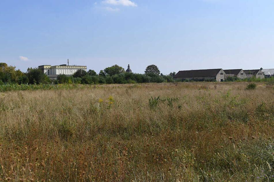 Noch ist es eine Brachfläche, doch schon bald soll hier das neue Trainingszentrum entstehen.