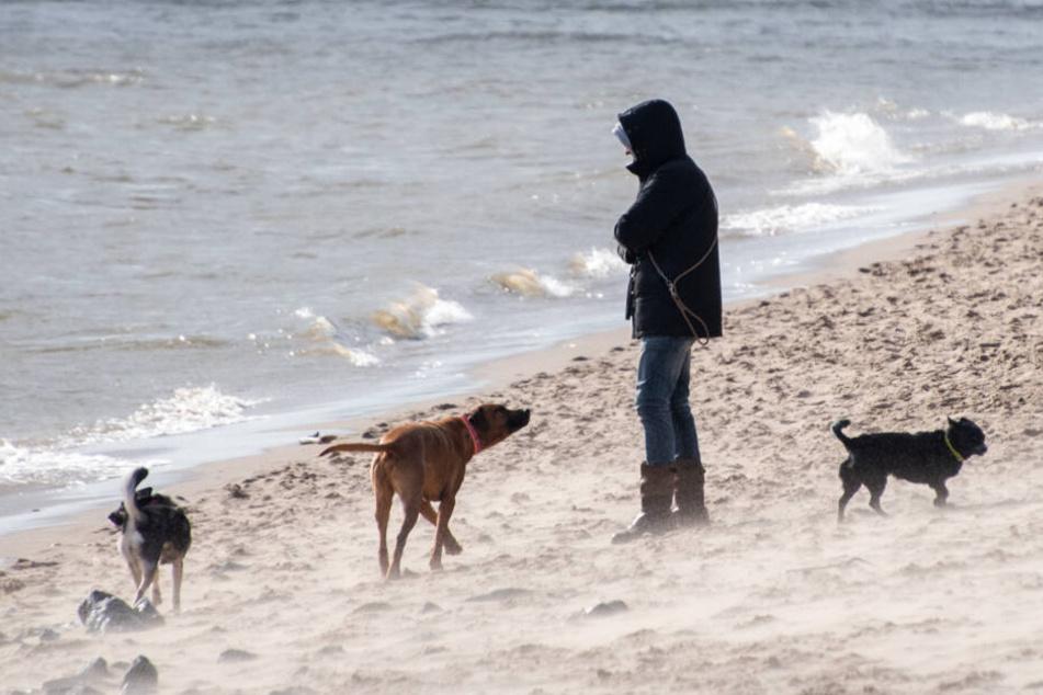 Stürmischer Wind wirbelt Sand am Elbstrand bei Övelgönne auf.