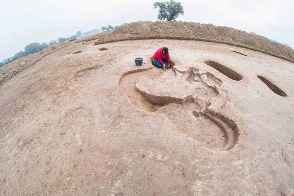 Die Wissenschaftler des Landschaftsverbandes Westfalen-Lippen legen ein 7000 Jahre altes Gräberfeld aus der frühen Jungsteinzeit frei