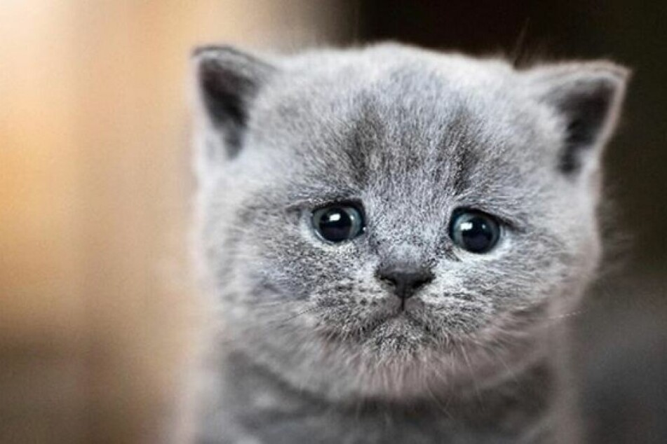Most people are heartbroken over images of crying cats.