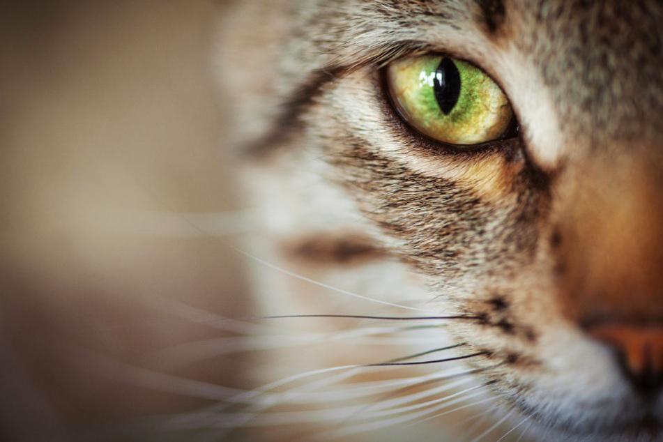Die Katze starb wenig später an den Folgen der brutalen Attacke (Symbolbild).