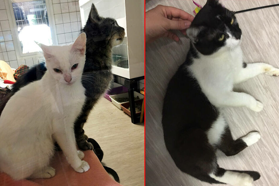 Warum verkauft ein sächsischer Landkreis diese niedlichen Katzen?