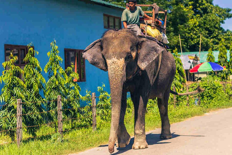 Ein Elefant verletzte die Frauen tödlich. (Symbolbild)