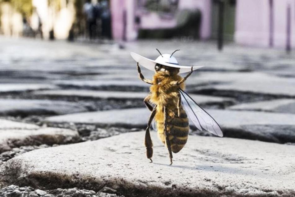 Coolster Influencer ever? Eine Biene mischt Instagram auf!