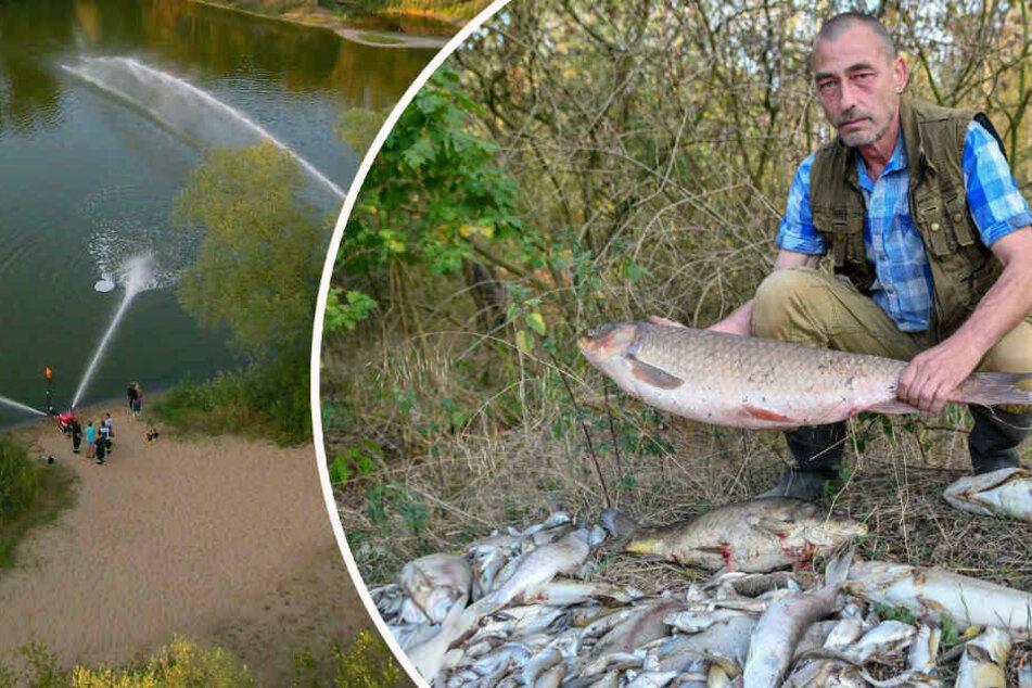 Todes-Drama im See: Hunderte Fische verenden, bevor Rettung kommt