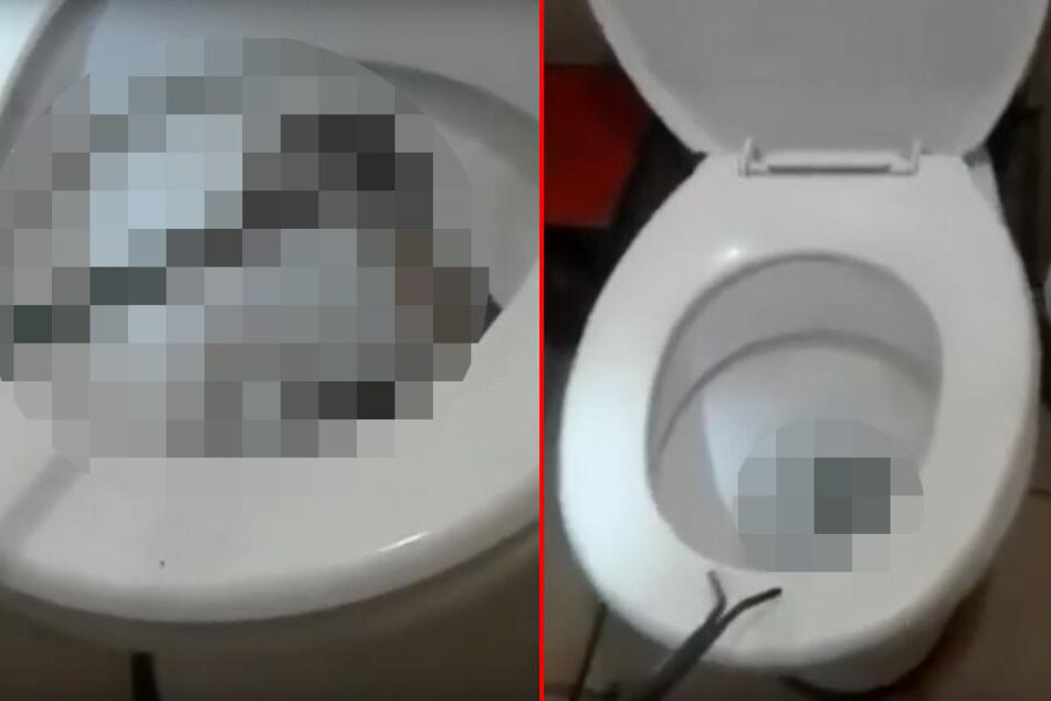 Mutter völlig außer sich, als sie Tochter von der Toilette hebt