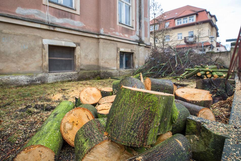 Mieter sind ausgezogen, die Bäume im Vorgarten sind gefällt: Im Rat fällt nun die Entscheidung, ob diese Trachauer Villa per Satzung geschützt wird.