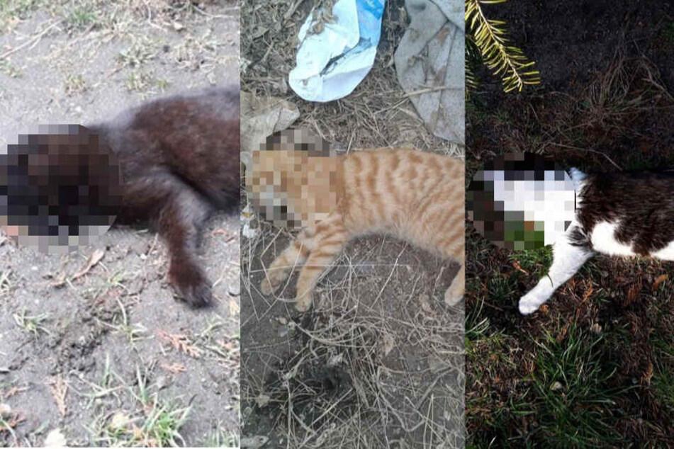 Drei tot, eine vermisst: Wer ist der Katzen-Killer?